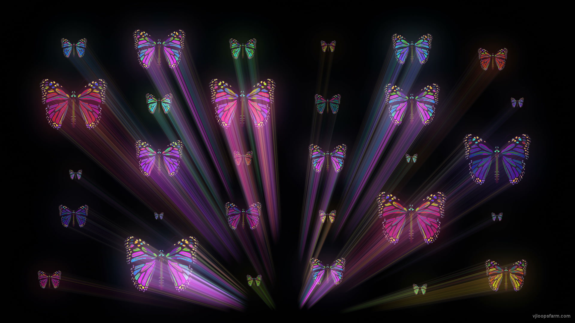 vj video background Colorful-Psychedelic-Butterfly-PSY-insects-collection-light-pattern-4K-Video-Art-VJ-Loop_003