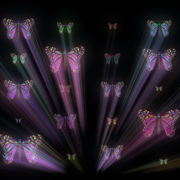 Colorful-Psychedelic-Butterfly-PSY-insects-collection-light-pattern-4K-Video-Art-VJ-Loop_005 VJ Loops Farm