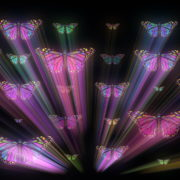 Colorful-Psychedelic-Butterfly-PSY-insects-collection-light-pattern-4K-Video-Art-VJ-Loop_007 VJ Loops Farm