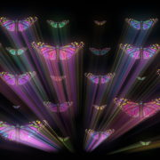 Colorful-Psychedelic-Butterfly-PSY-insects-collection-light-pattern-4K-Video-Art-VJ-Loop_009 VJ Loops Farm