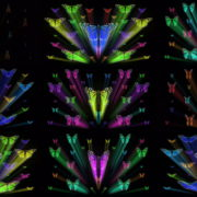 Colorful-Rays-Center-Stage-glow-Butterflies-insects-pattern-4K-Video-Art-VJ-Loop VJ Loops Farm