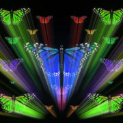 Colorful-Rays-Center-Stage-glow-Butterflies-insects-pattern-4K-Video-Art-VJ-Loop_002 VJ Loops Farm