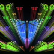 Colorful-Rays-Center-Stage-glow-Butterflies-insects-pattern-4K-Video-Art-VJ-Loop_007 VJ Loops Farm