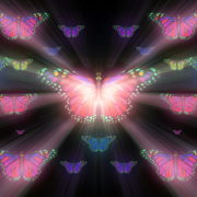 Colorful-Rays-Psychedelic-Center-Butterfly-PSY-insects-collection-light-pattern-4K-Video-Art-VJ-Loop_002 VJ Loops Farm