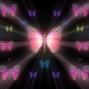vj video background Colorful-Rays-Psychedelic-Center-Butterfly-PSY-insects-collection-light-pattern-4K-Video-Art-VJ-Loop_003