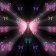 Colorful-Rays-Psychedelic-Center-Butterfly-PSY-insects-collection-light-pattern-4K-Video-Art-VJ-Loop_005 VJ Loops Farm