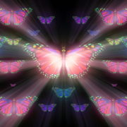 Colorful-Rays-Psychedelic-Center-Butterfly-PSY-insects-collection-light-pattern-4K-Video-Art-VJ-Loop_007 VJ Loops Farm