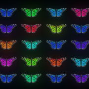 Random-Color-Light-Fly-Butterfly-Collection-Video-Art-Motion-Background-4K-VJ-Loop_002 VJ Loops Farm