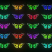 Random-Color-Light-Fly-Butterfly-Collection-Video-Art-Motion-Background-4K-VJ-Loop_007 VJ Loops Farm