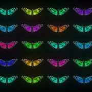 Random-Color-Light-Fly-Butterfly-Collection-Video-Art-Motion-Background-4K-VJ-Loop_009 VJ Loops Farm