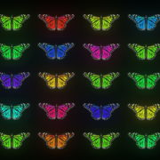 Random-fast-Color-change-Butterfly-Collection-Video-Art-Motion-Background-4K-VJ-Loop_002 VJ Loops Farm