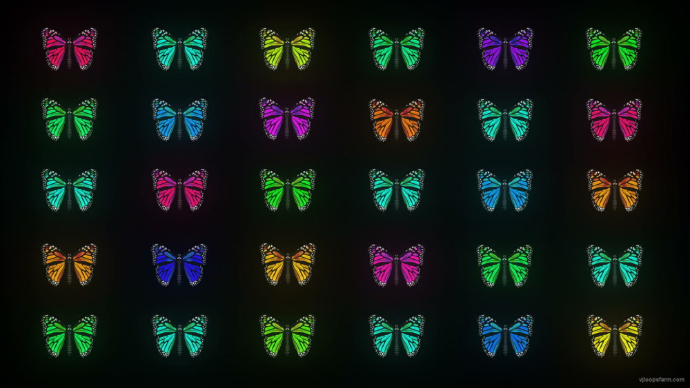 vj video background Random-fast-Color-change-Butterfly-Collection-Video-Art-Motion-Background-4K-VJ-Loop_003