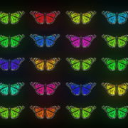 Random-fast-Color-change-Butterfly-Collection-Video-Art-Motion-Background-4K-VJ-Loop_007 VJ Loops Farm