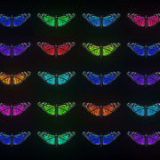 Random-fast-Color-change-Butterfly-Collection-Video-Art-Motion-Background-4K-VJ-Loop_009 VJ Loops Farm