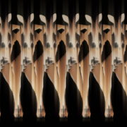 Shaking-Ass-Bunny-Girl-Video-Art-Vj-Loop-4K_001 VJ Loops Farm