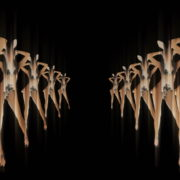 Tunnel-Playboy-Girls-Rabbit-4K-Video-Art-VJ-Loop_001 VJ Loops Farm