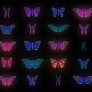 Butterfly collection kit 4k video footage looped