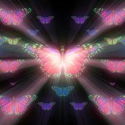 Butterfly_effect_Vj_Loop_Video_Art