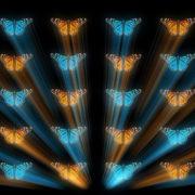 Butterfly_effect_Vj_Loop_video wallpaper