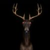 neon deer visuals vjing