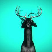 Neon_Deers_VJ_Loops_VIsuals_Motion_Backgrounds_Layer_488