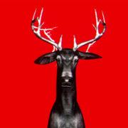 Neon_Deers_VJ_Loops_VIsuals_Motion_Backgrounds_Layer_489