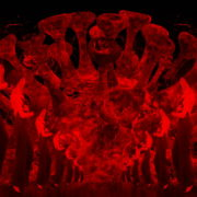 Corona-Virus-Girl-Dancing-on-Covid19-Cell-with-strobing-red-white-effect-video-art-4K-VJ-Footage-1920_009 VJ Loops Farm