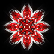 vj video background WindRose-Geometric-Flower-fullhd-VIdeo-Art-VJ-Loop_003