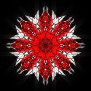 WindRose-Geometric-Flower-fullhd-VIdeo-Art-VJ-Loop_004 VJ Loops Farm