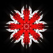 WindRose-Geometric-Flower-fullhd-VIdeo-Art-VJ-Loop_005 VJ Loops Farm