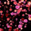 VJ-Loops-pack-blossom-flow