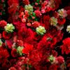 Flower-motion-background-vj-loops
