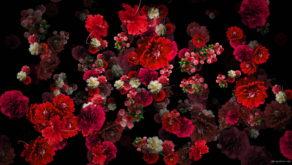 Blood-Red-Carnation-Bouquets-Falling-Down-Festive-Scene-Decoration-zcaayh-1920_008 VJ Loops Farm