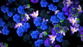 Blue-Flowers-Slowly-Flying-Over-Screen-Looped-Motion-Background-luoz7l-1920_005 VJ Loops Farm
