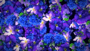Blue-Purple-Violets-Counter-Move-Flows-Looped-Motion-Background-xg1knr-1920_009 VJ Loops Farm