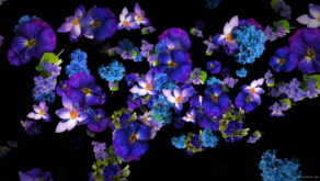 Blue-and-Purple-Violets-Flowers-move-up-right-flow-looped-concert-decorations-cmukvt-1920_004 VJ Loops Farm