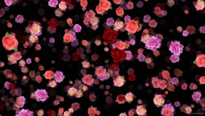 Colorful-Rose-Buds-Falling-down-slowly-motion-backgrounds-qbdwhr-1920_009 VJ Loops Farm