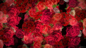 Colorful-Roses-Bouquets-Flowing-Up-Looped-Motion-Background-mt4u9m-1920_009 VJ Loops Farm