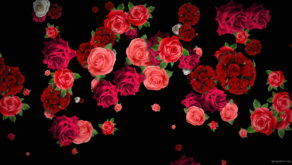 Different-Red-Rose-Flowers-Falling-Down-Motion-Background-czmiyf-1920_009 VJ Loops Farm