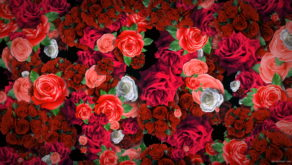 Festive-Looped-Decoration-of-Roses-Flowers-Counter-Move-Flows-kpyxk1-1920_006 VJ Loops Farm