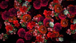 vj video background Multi-layered-diagonal-move-of-red-autumn-carnation-flower-motion-background-halq8g-1920_003