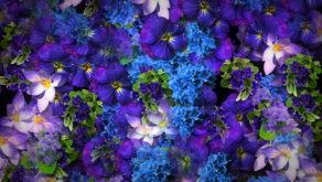 Natural-Beautiful-Violet-Purple-Blue-Flowers-Flying-Up-Concert-Wedding-Decorations-mpm4gf-1920_004 VJ Loops Farm