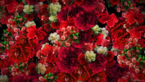 Numerous-Red-Flowers-Slowly-Flying-Upward-on-Looped-Motion-Background-ycrauh-1920_005 VJ Loops Farm