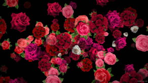 Pink-Red-Roses-Bouquets-Flying-up-Right-Motion-Background-xxfe91-1920_006 VJ Loops Farm