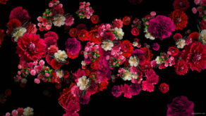 Pink-and-Purple-Red-Flowers-Flow-Looped-Motion-Background-qn7owm-1920_004 VJ Loops Farm
