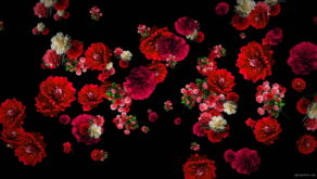vj video background Red-Carnation-Bouquets-Slowly-Falling-Motion-Background-iyn6tc-1920_003