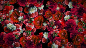 Red-Spring-Flowers-Counter-move-Flows-Motion-Decoration-Background-lubgxp-1920_007 VJ Loops Farm