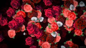 Roses-Flowers-Different-Directions-Flow-Looped-Concert-Decorations-vvq38w-1920_004 VJ Loops Farm