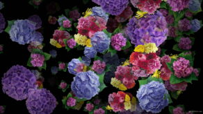 Spring-Flowers-Bouquets-Falling-Down-Motion-Background-ongpol-1920_005 VJ Loops Farm
