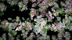 Spring-Fruit-Trees-Flowers-with-Leaves-Flow-to-the-Side-Scene-Decoration-njc9gb-1920_006 VJ Loops Farm